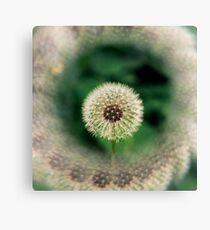 dandelion #1 Leinwanddruck