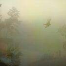 Beautiful Foggy Morning by DottieDees