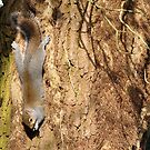 I'll Do Anything For Some NUTS !!!! by Kevin Cotterell