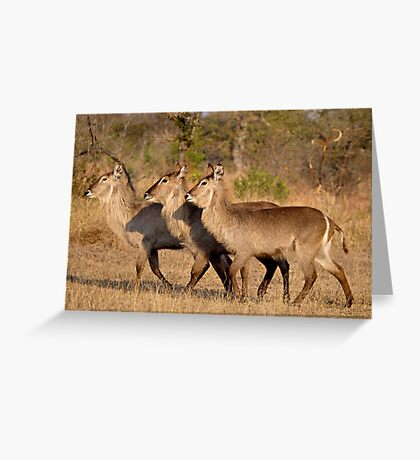 Girls, Look At That Guys Horns! Greeting Card