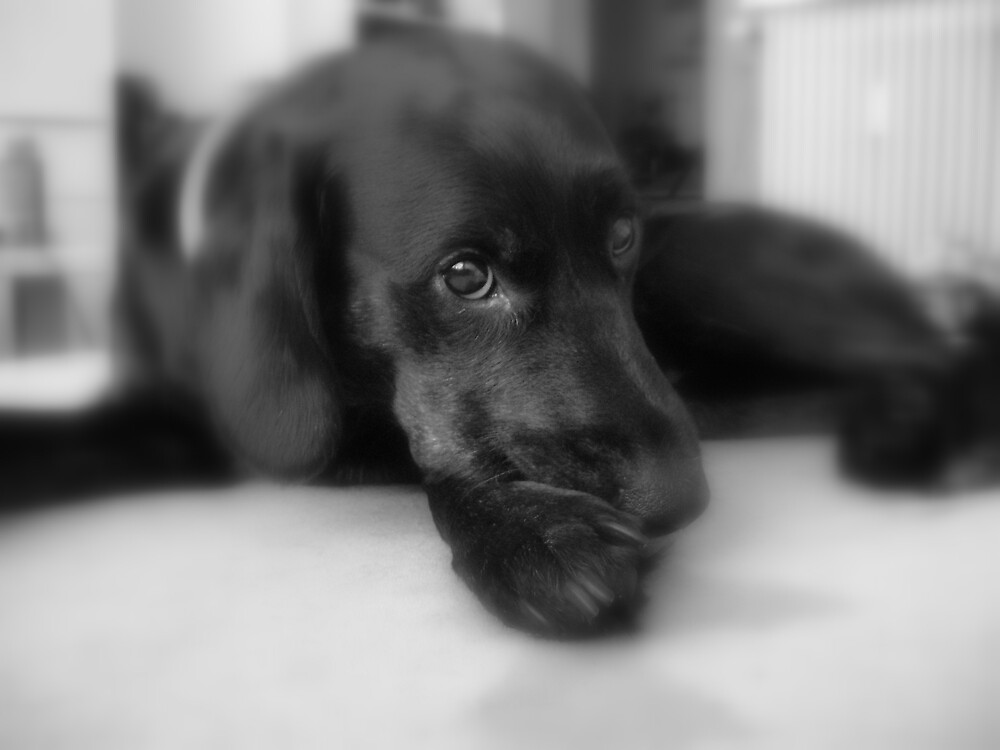 Dog portrait by Sisse