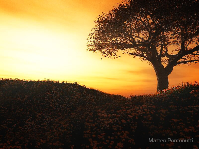 The Cherry Tree by Matteo Pontonutti