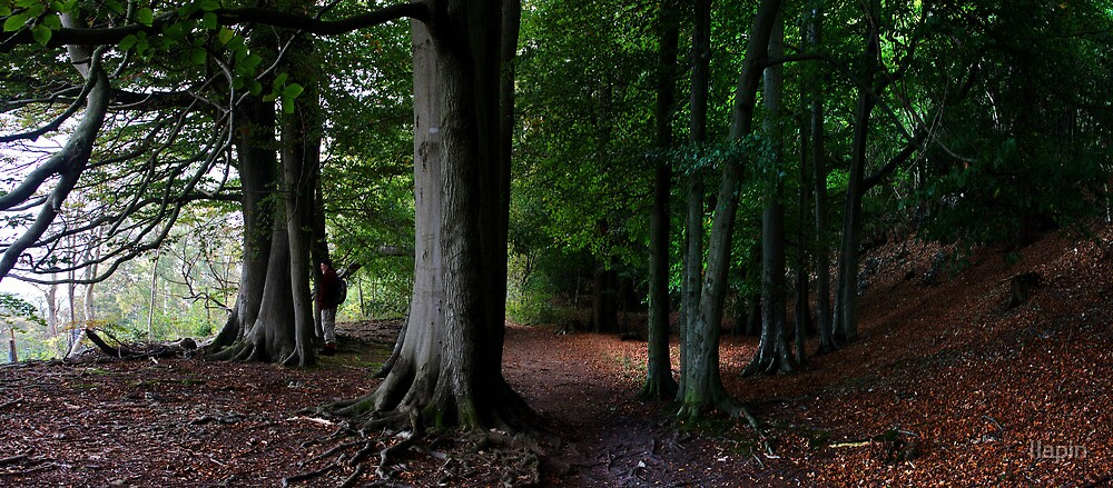 eves wood beeches panorama by Ilapin