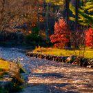 Herring Run in Autumn by Monica M. Scanlan