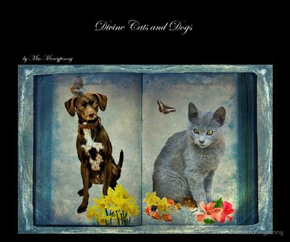 Divine Cats and Dogs by missmoneypenny