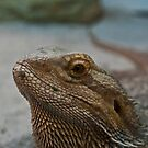 Bearded Dragon Closeup by ArianaMurphy