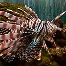 Striped Lionfish by ArianaMurphy