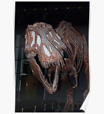 Fossil Tyranasaurus Rex skeleton, mounted Poster
