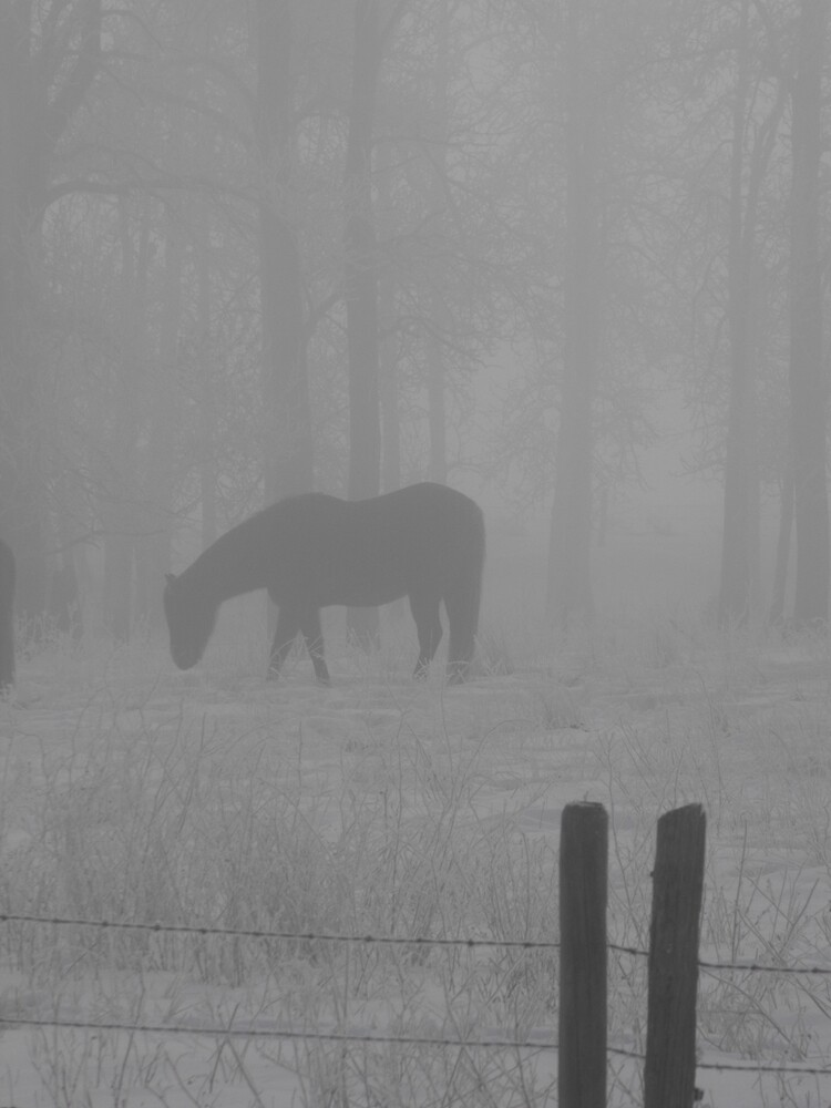 Horse in an Ice Fog by ArianaMurphy