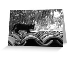 Cat on Hot Tiles Greeting Card