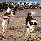 Christmas Aussie Style by Varinia   - Globalphotos