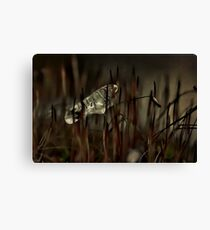 Moss and Ice Canvas Print