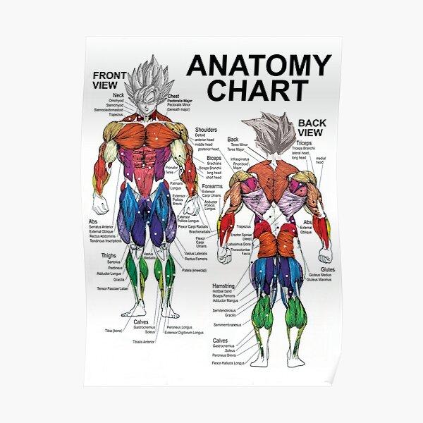 Saiyan Anatomy Chart - Muscle Diagram - Anime Workout Poster