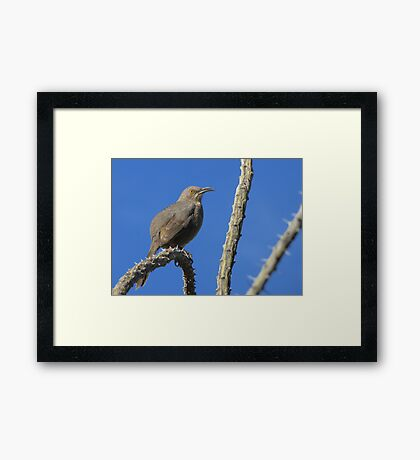 Curved-billed Thrasher ~ I Know Your Watching Me Framed Print