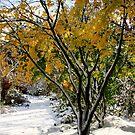 winter grace by TerrillWelch
