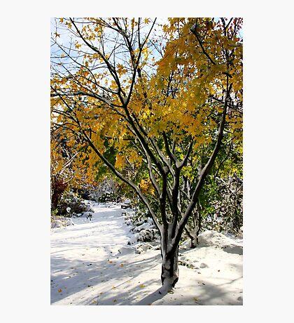 winter grace Photographic Print