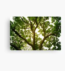 on your back Canvas Print