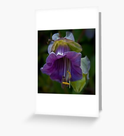 Cup-and-saucer Vine Greeting Card