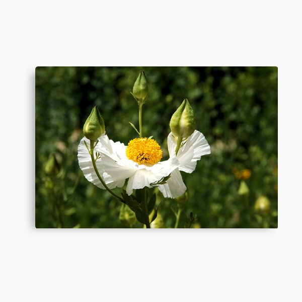 A Flower For You Canvas Print