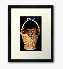 Present dog in a basket with blue ribbon Framed Print