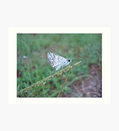 Spring Azure butterfly with an ant Art Print