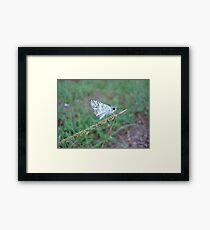 Spring Azure butterfly with an ant Framed Print
