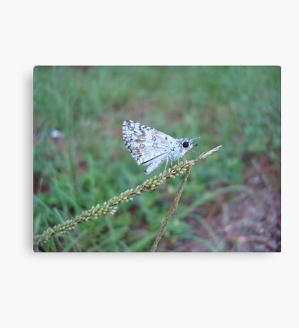 Spring Azure butterfly with an ant Canvas Print