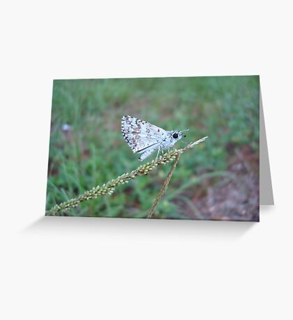 Spring Azure butterfly with an ant Greeting Card