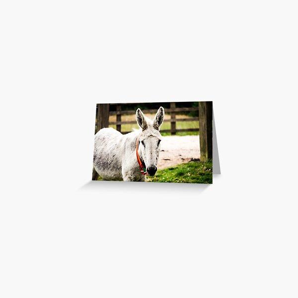 White Donkey Greeting Card