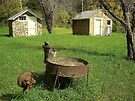 Days Gone By, Back yard Grinder, NW Arkansas by David  Hughes