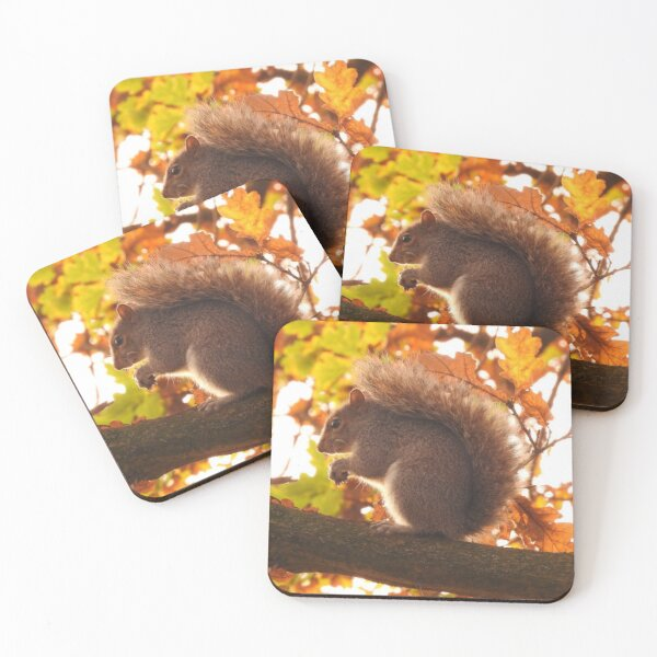 Squirrel eating Coasters (Set of 4)