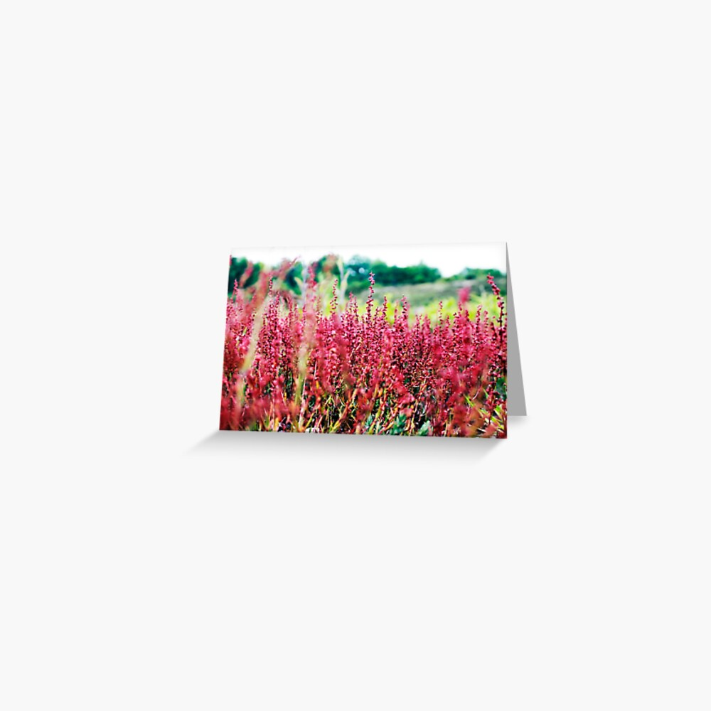 Pink Wild Flowers Greeting Card