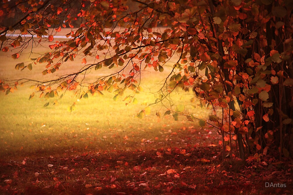 Autumn Colours by DAntas