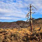 Kamloops Rain Shadow by Frank Bibbins