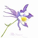 Springtime Columbine by Pat Yager