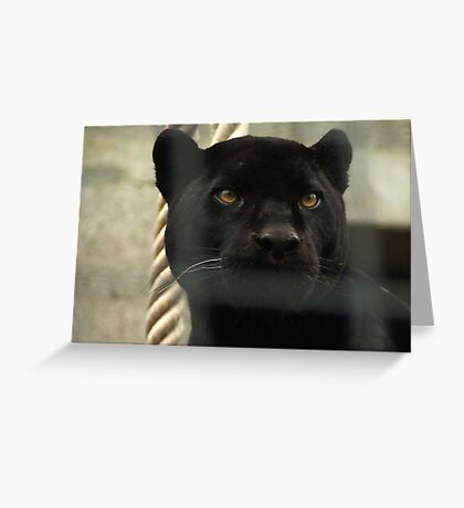 Wild and Captive Greeting Card