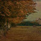 Field of Normandie by Jean-Pierre Ducondi