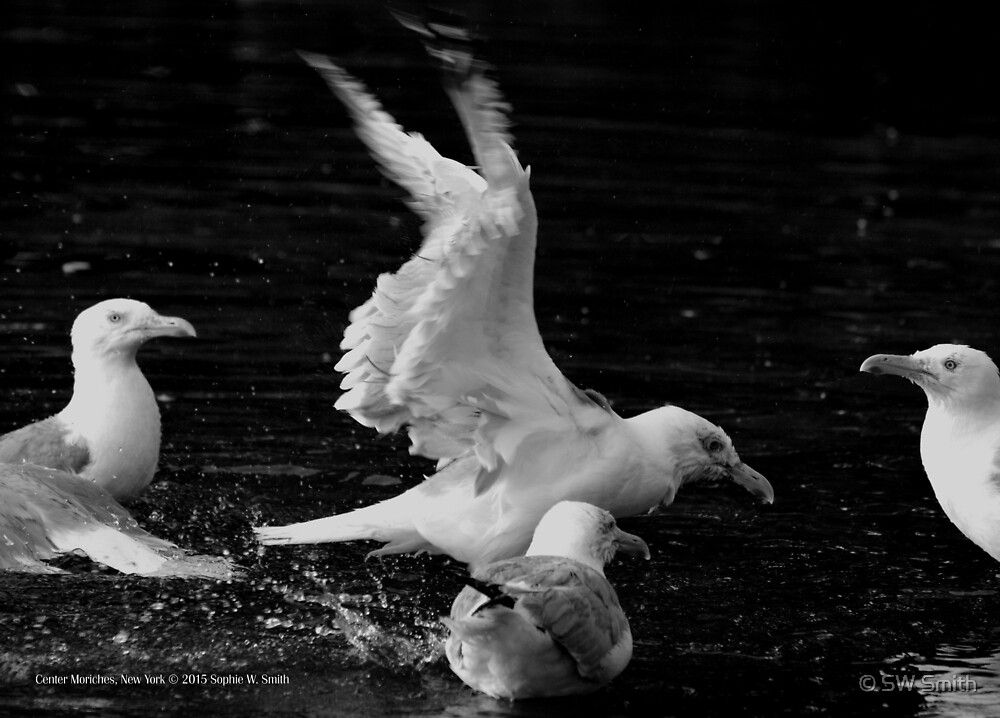 Seagulls - Bath Time | Center Moriches, New York  by © Sophie W. Smith