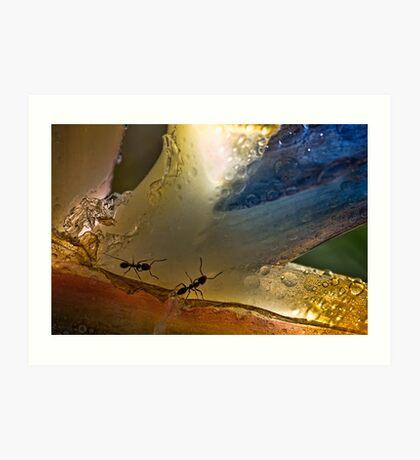 Ameisen im Paradies Kunstdruck