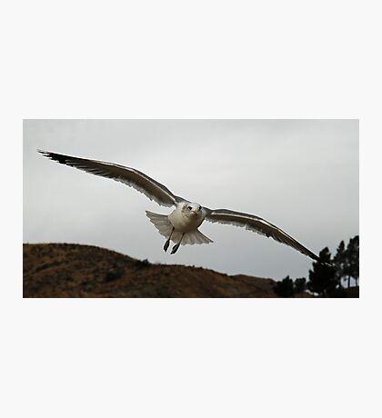 Soaring Seagull Photographic Print