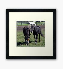 Horse and Mule Framed Print