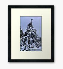 Snow Laden Framed Print