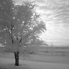 Calm After The Storm by Rhonda Blais