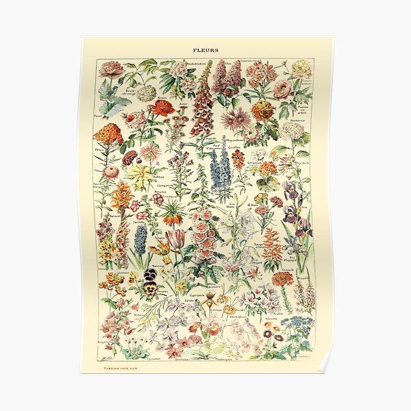 Larousse Vintage Botanical Wall Art Flower Poster Poster