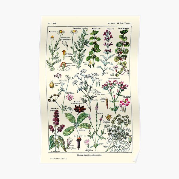 Vintage Digestive Plants Larousse Print Adolphe Millot Poster