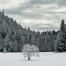 Lone Tree in the WInter by toby snelgrove  IPA