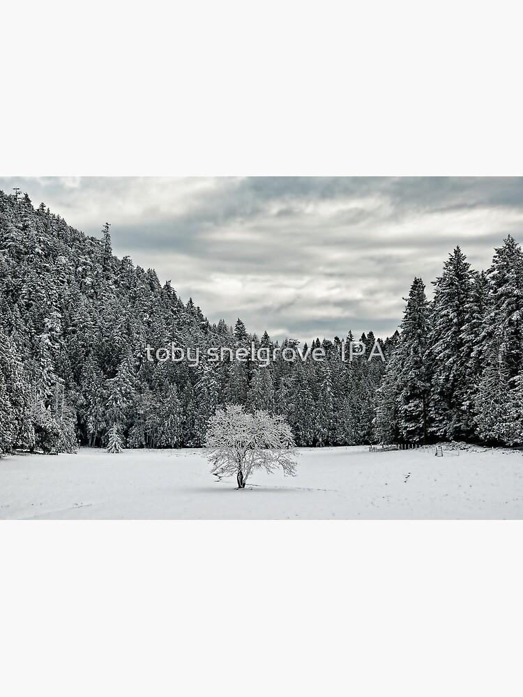Lone Tree in the WInter by tobysnelgrove