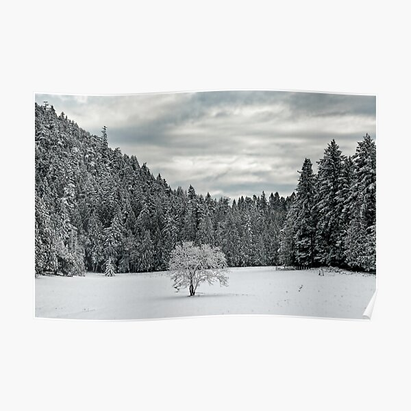 Lone Tree in the WInter Poster