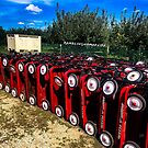 1221 Red Carts by WanderingWriter