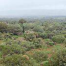 Central Deserts of Australia  by Steven Pearce